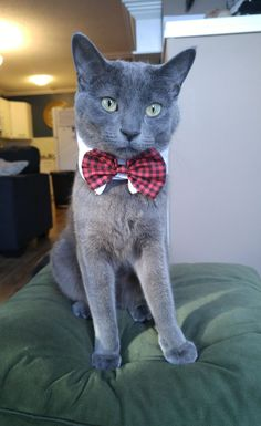 Meet Sir Lewis Meowfurrson, the handsome cat with bow tie