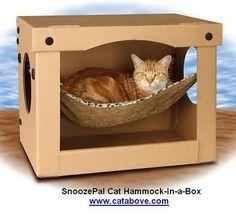 Gatos Consentidos: Accesorios para el gato