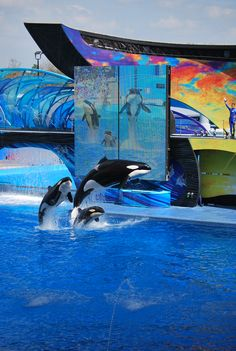 Sea World, Went here with my parents when I was a little kid. Loved every minute of it!