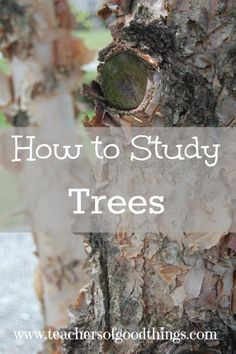 How to Study Trees - tips of how to easy learn to identify trees could be a fun on the side lesson! Outdoor Education, Outdoor Learning, Classical Education, Study Biology, Teaching Biology, Nature Activities, Stem Activities, Learning Activities, Outdoor Activities