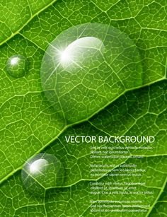 Shiny Green leaves background design vector 04