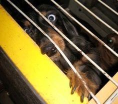 Puppy Mills...please support Animal Rescue Corps.   http://animalrescuecorps.org/staff/