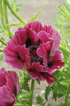 hortensien die besten arten und sorten pflanzen und pflegen von katharina adams http www. Black Bedroom Furniture Sets. Home Design Ideas