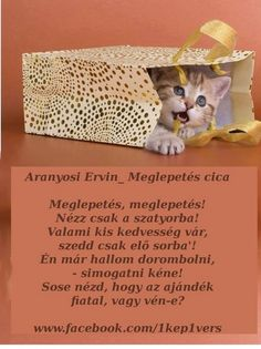 Aranyosi Ervin Meglepetés Cats, Quotes, Blog, Quotations, Gatos, Blogging, Cat, Kitty, Quote