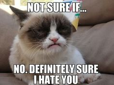 Grumpy Cat does not like birthdays. Grumpy cat is at it again why I love cats Things That Will Make You Feel Old. Grumpy Cat Quotes, Funny Grumpy Cat Memes, Funny Cats, Funny Animals, Cute Animals, Grumpy Kitty, Animal Funnies, It's Funny, Farts Funny