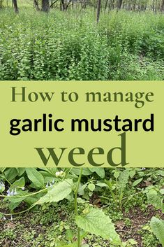 Have you ever battled a terrible weed and wondered whether it was even worth the effort? I'm declaring victory in my garlic mustard weed battle. Butterfly Species, Invasive Plants, Garden Borders, Garden Inspiration, Citizen, Beautiful Gardens, Planting, Gardening Tips, Weed