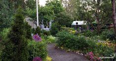 Lifestyle, Garden, Plants, Summer, Garten, Summer Time, Lawn And Garden, Gardens, Plant