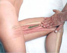 Basic Clinical Massage Therapy - Adductor Magnus