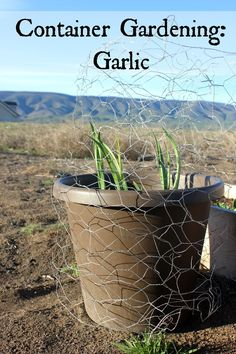 Container Gardening: A Failure and a Success
