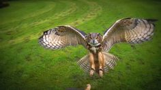 Best Slow Motion Owl Footage - Set To Music - Must See!