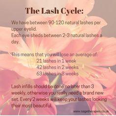 The lash cycle. www.sagetherapies.co.uk #lashcycle #eyelashextensions #lashes #beauty