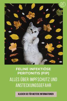 Auf Basis neuester wissenschaftlicher Studien und in enger Zusammenarbeit mit Tierärzten haben wir ein umfangreiches und vielfältiges Sortiment an Nahrungsergänzungsmitteln für Hunde, Katzen und Pferde entwickelt.