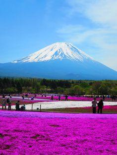 一度は行ってみたい!絶景の富士芝桜まつり