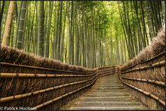 Kyoto Itinerary, Land Of Enchantment, Continents, Cool Places To Visit, Fun Activities, The Good Place, Bamboo, Kyoto Japan, Channel