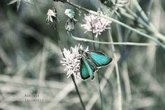 Butterfly by Monique Ingenhutt