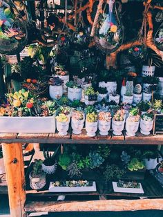 // not my pics // love all of you! Cactus Plants, Cacti And Succulents, Plant Aesthetic, Plants Are Friends, Aesthetic Pictures, Wall Collage, Pretty Flowers, Houseplants, Indoor Plants