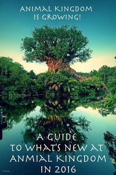 Click on the picture for the link! Disney World Disney's Animal Kingdom 2016. Disney World 2016 Guide. http://waltdisneydarling.blogspot.com