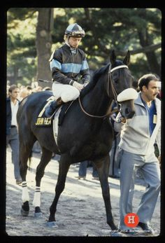 JOHN HENRY - I feel so Blessed to have had to the ultimate honor of not only meeting him in person, but actually getting to put my hands on him.  He became my reason for visiting the Kentucky Horse Park twice a year where he was stabled in the Hall of Champions.