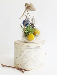 $22 - Teardrop Glass Terrarium (5 tall) includes: Air plant, white sand, yellow billy buttons, blue milk thistle, grapevine and twine for hanging.