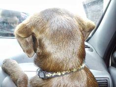 Emma puppy travelling