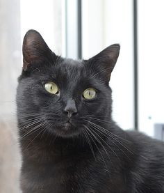 Family Buried Wrong Black Cat