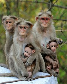 Monkey family | There were lots of Monkeys on the roadside a… | Flickr