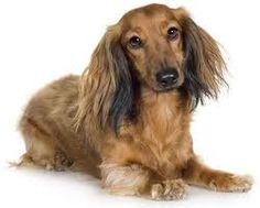 CachorrosBlogs.: Cachorro Sardento.