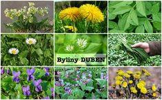 Bylinky duben - bylinky a rostliny sbírané v dubnu - Bylinky pro všechny