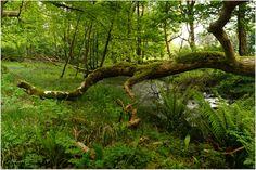 Forest... by Krzysztof Szwab on 500px