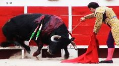 PLZ HELP TO #BANBULLFIGHTING IN #SPAIN RT https://www.change.org/p/partido-popular-ban-bullfighting-by-law-throughout-all-spanish-provinces-2?recruiter=468536&utm_source=share_petition&utm_medium=facebook&utm_campaign=autopublish&utm_term=des-lg-share_petition-no_msg… @laurahernande66 @TOROSNUNCAMAS @NOTORDESILLAS15