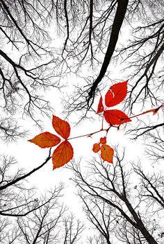 ✯ The last leaves of November