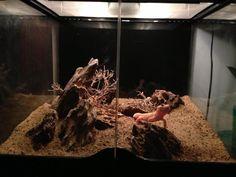 So this is my thread showing my build of my naturalistic Leopard gecko viv! Tarantula Habitat, Tarantula Enclosure, Reptile Habitat, Reptile Room, Reptile Cage, Reptile Enclosure, Leopard Gecko Setup, Leopard Gecko Habitat, Leopard Geckos