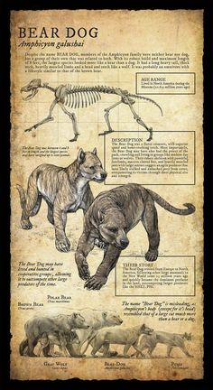 Design and Illustration for extinct, prehistoric animal specimens and fossils, natural history museum signage.