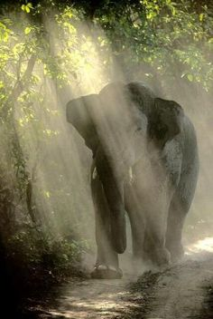 PetsLady's Pick: Amazing Elephant Of The Day...see more at PetsLady.com -The FUN site for Animal Lovers