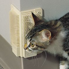 Corner Comb: I haven't tried this, but many groomers recommend a corner comb, a device that goes on your wall that the cat rubs against, like so: