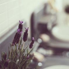 We love fresh lavender!
