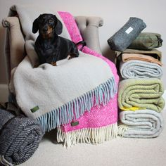 Wool throws, lambswool scarves, Harris tweed, homeware, textiles, grey, pink, duck egg blue, yellow, dachshund