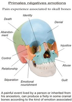 Osteodouce ( Remote Somatic Balancing ) is a powerful healing method to harmonize the body structure without physical contact using the Universal Energy. Treatments and Private courses online via Skype. Online Training Courses, Online Courses, Human Skeleton Anatomy, Craniosacral Therapy, Emotional Connection, Negative Emotions, Skull And Bones, Physical Therapy, Denial