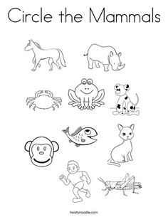 Worksheets Mammal Worksheets colorful mammals coloring page twisty noodle animal readers circle the noodle