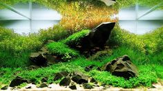 Want to improve your aquascaping skills? Click on our profile and follow the link!  Adriano Montoro Nicacio