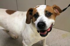 MOVED TO BOARD OCT 25 NAME: Ravioli fish  ANIMAL ID: 24046403  BREED: Pit mix  SEX: male  EST. AGE: 2 yr  Est Weight: 58 lbs  Health: heartworm test pending  Temperament: dog friendly, people friendly  ADDITIONAL INFO: RESCUE PULL FEE: $49  Out of time petrescue@greenvillecounty.org