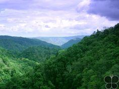 Dandeli Wildlife Sanctuary http://www.hikeezee.com/explore/destinations/dandeli-wildlife-sanctuary-3065  #tigerreserve #wildlife #karnataka