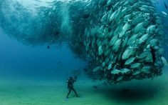 Balıklar (Cabo Pulmo, Meksika)