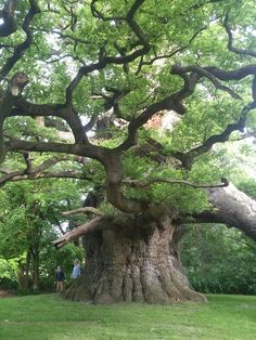 Weird Trees, Magical Tree, Unique Trees, Old Trees, Old Oak Tree, Tree Photography, Beautiful Nature Photography, Levitation Photography, Exposure Photography