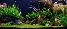 Votez pour cette oeuvre d'art d'aquascaping sur Photomalia by Zoomalia http://www.zoomalia.com/photomalia #jeuxconcours #photomalia #zoomalia #aquascaping #aquascape #aquarium #poisson #animalerieEnLigne