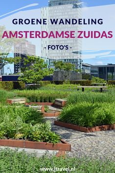 Ik maakte een wandeling langs de groene delen van de Amsterdamse Zuidas. Mijn foto's van de bezochte plekken zie je je hier. Kijk je mee? #amsterdamsezuidas #wandelen #amsterdam #amsterdamzuid #jtravel #jtravelblog #fotos