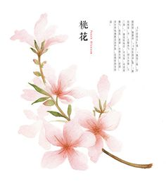 hand drawing watercolor plants--peach blossom by GaloShining on DeviantArt