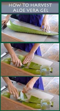 Aloe vera is amazing plant which is also known as the plant of immortality. Aloe vera has been used for many purposes since ancient times. Aloe vera plant is a miracle plant and has many skin and hai Healing Herbs, Medicinal Plants, Natural Healing, Natural Skin, Natural Beauty, Organic Beauty, Herbal Remedies, Home Remedies, Natural Remedies