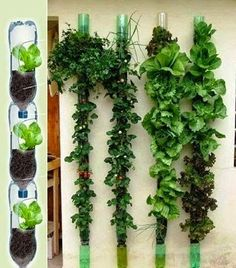 horta na parede com garrafa pet