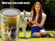 Ha! Using actual pic of Sophie Turner & Zunni, the dog who she adopted & played her direwolf (Lady.)
